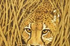 Cheetah-Bechtold