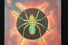 Baltruknois-spider