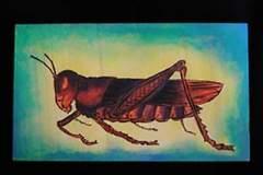 Baltrukonis-grasshopper