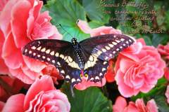 Angelica-Precious-Butterfly