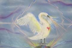 Swan & Duckling I